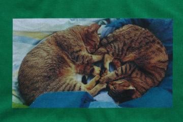 Foto dvě kočky